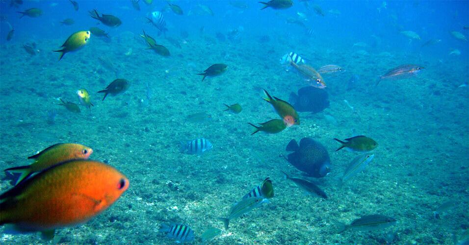 as belezas dos santuários marinhos brasileiros