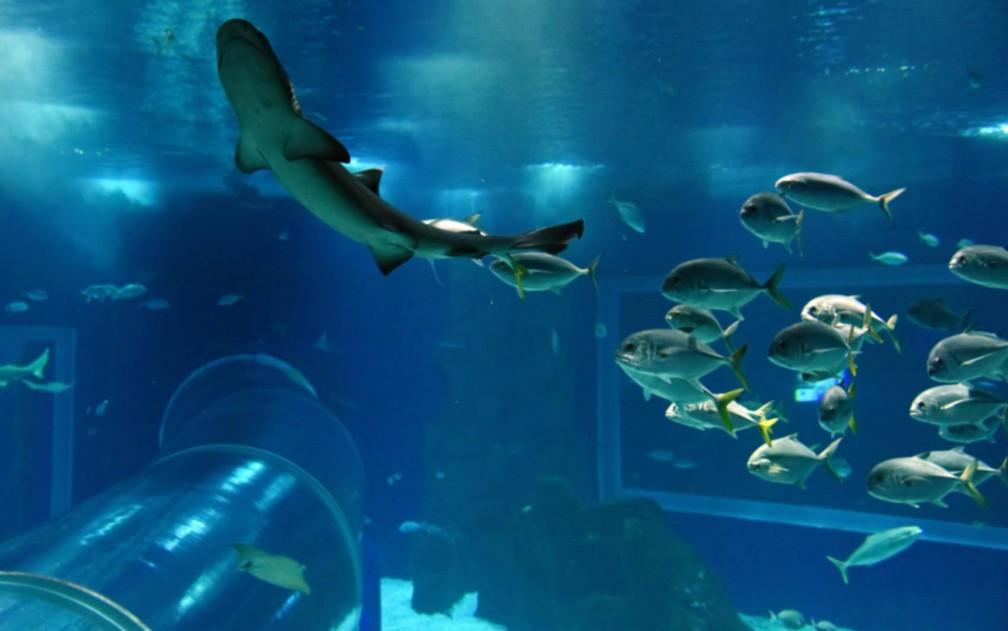 aquario tem mostra sobre óleo em praias, sereia e tubarões