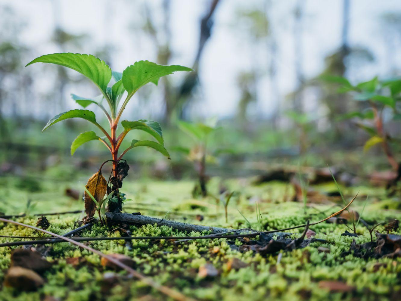 app oferece calendário lunar agrícola com melhor época de plantio