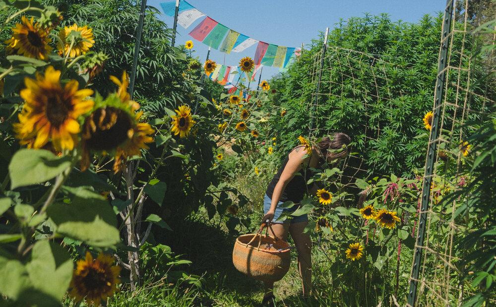 o que é e como acontece a agricultura biodinâmica