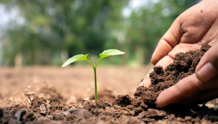 gpa distribui 28 mil sementes que podem ser plantadas em qualquer espaço
