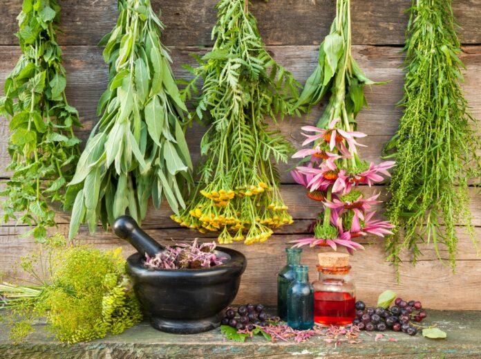segredo das plantas medicinais integram aulas da semana de fitoterapia
